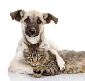 Cats and dogs can cause unpleasant odours