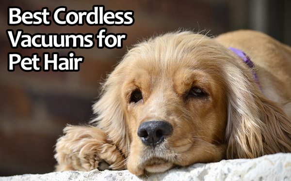 We take a look at some of the best cordless vacuums that can handle pet hair